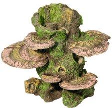 Kerbl Stamm mit Pilzen
