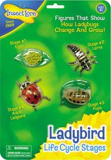 Insect Lore Ladybug Lifecycle Stages