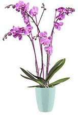 Elho Brussels orchid high 12,5cm mint