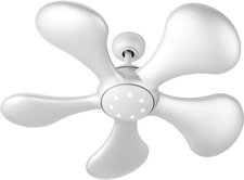 Fantasia Ceiling Fans Splash
