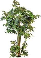 Europalms Fishtail-Palmbaum 305 cm