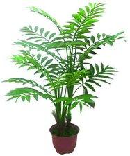 Areca Palme mit Zementfuß 180cm