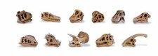 Safari Dinosaurierschädel (765504)
