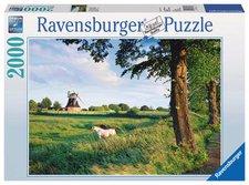Ravensburger Pferde vor Windmühle