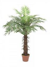 Europalms Cocospalme mit 15 Wedeln 120 cm
