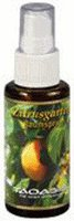 Taoasis Zitrusgarten Raumspray (10 ml)