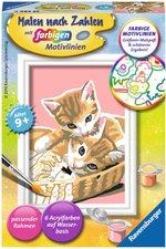 Ravensburger Malen nach Zahlen Katzenbabys