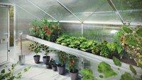 KGT Pflanzwanne für Flora III