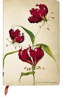 Ruhmeskrone/Gloriosa Rothschild Blumenzwiebeln